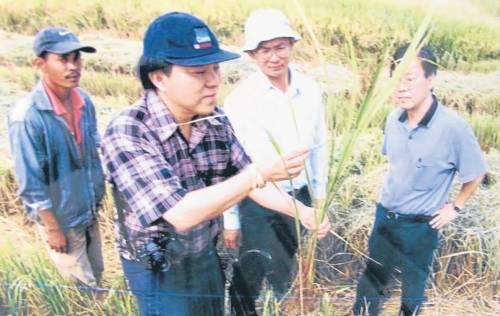 曾任职慕达农业发展局高级农业官, 何乃健把所学的贡献予水稻工作。